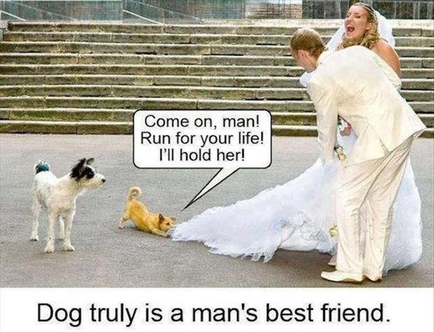 photo of dog wants to stop wedding near church
