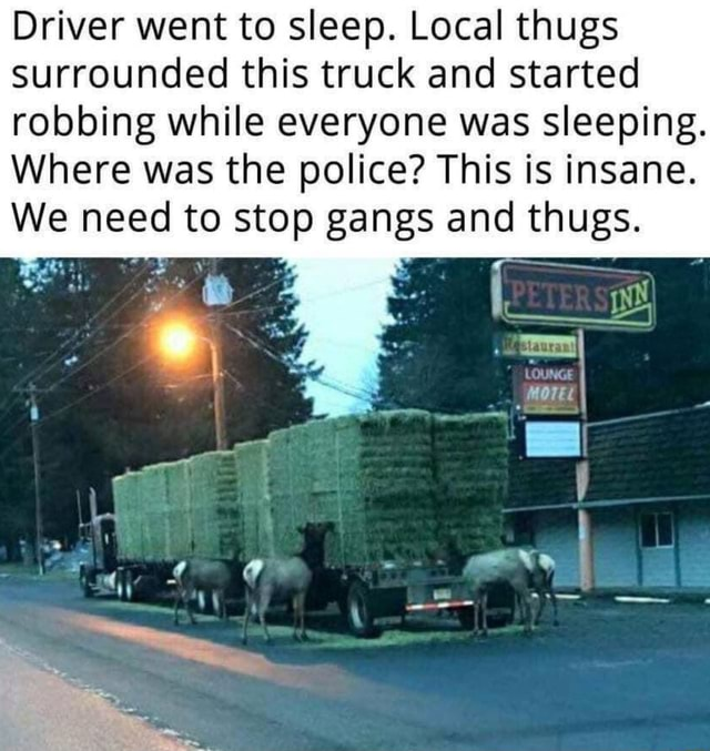 Driver went to sleep. Local thugs surrounded this truck and started robbing while everyone was sleeping. Where was the police This is insane. We need to stop gangs and thugs meme