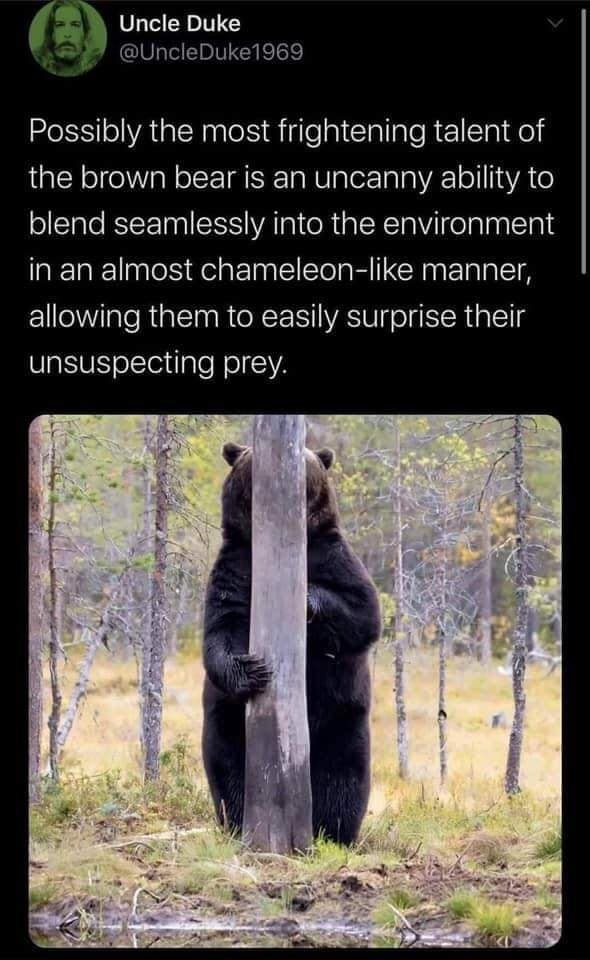 Uncle Duke Possibly the most frightening talent of the brown bear is an uncanny ability to blend seamlessly into the environment in an almost chameleon like manner, allowing them to easily surprise their unsuspecting prey meme