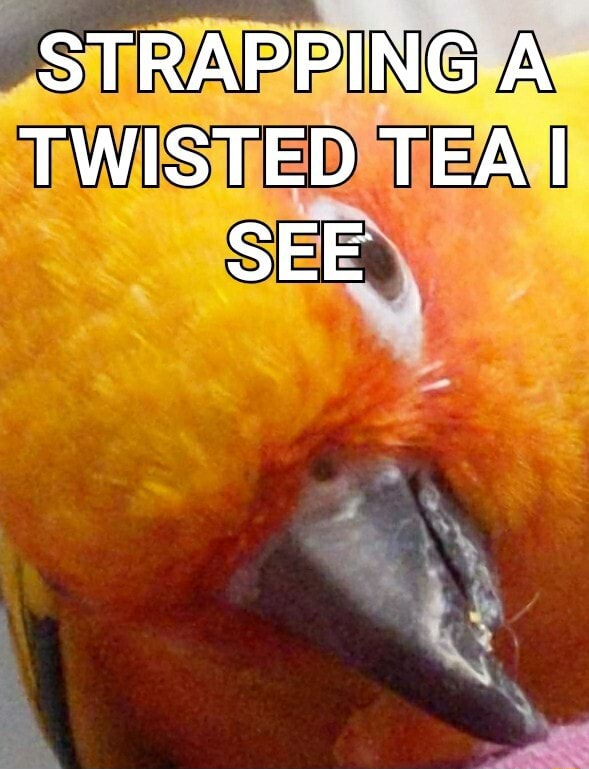 STRAPPING A TWISTED TEA I SEE meme