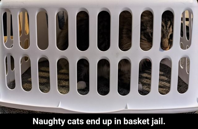 Naughty cats end up in basket jail. Naughty cats end up in basket jail memes