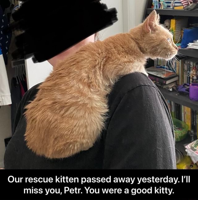SS Our rescue kitten passed away yesterday. I'll miss you, Petr. You were a good kitty. Our rescue kitten passed away yesterday. I'll miss you, Petr. You were a good kitty meme