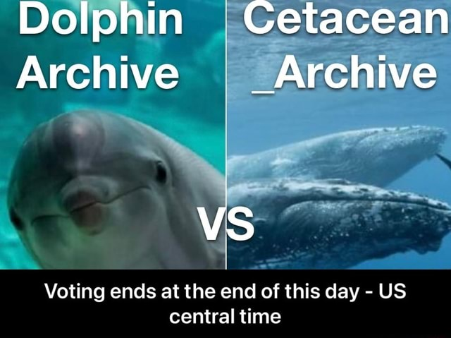 Dolphin Cetacean Archive I Archive Voting ends at the end of this day US central time Voting ends at the end of this day US central time memes