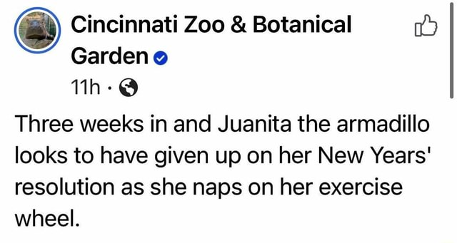 Juanita is my spirit animal. Cincinnati Zoo and Botanical Garden Three weeks in and Juanita the armadillo looks to have given up on her New Years resolution as she naps on her exercise wheel meme