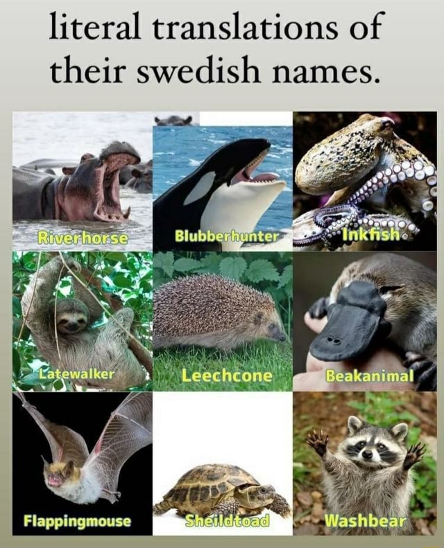 Literal translations of their swedish names. Flappingmouse meme