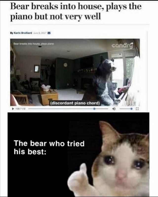 Bear breaks into house, plays the piano but not very well By Karin Bruiliard Boar dlscordant chord The bear who tried his best meme