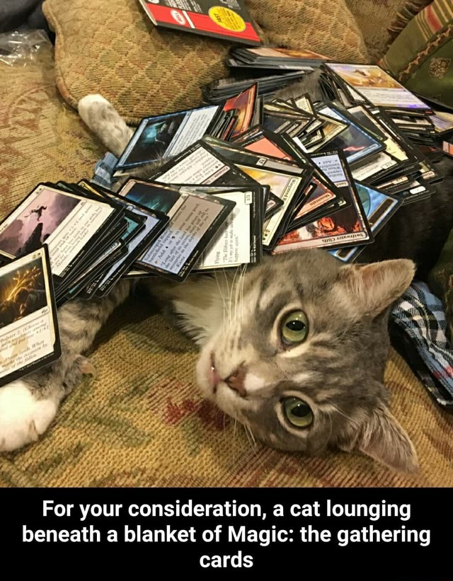 For your consideration, a cat lounging beneath a blanket of Magic the gathering cards  For your consideration, a cat lounging beneath a blanket of Magic the gathering cards memes