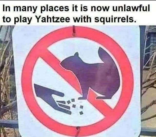 In many places it is now unlawful to play Yahtzee with squirrels. Ai memes