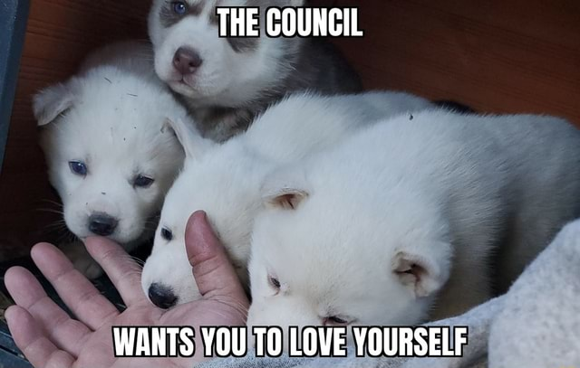 THE COUNCIL WANTS YOU TO LOVE YOURSELF memes