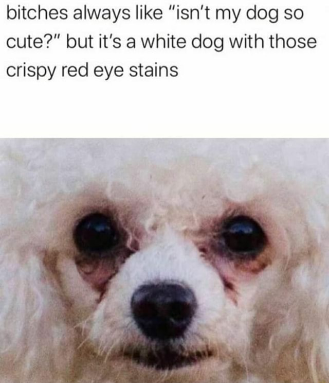 Bitches always like isn't my dog so cute but it's a white dog with those crispy red eye stains memes