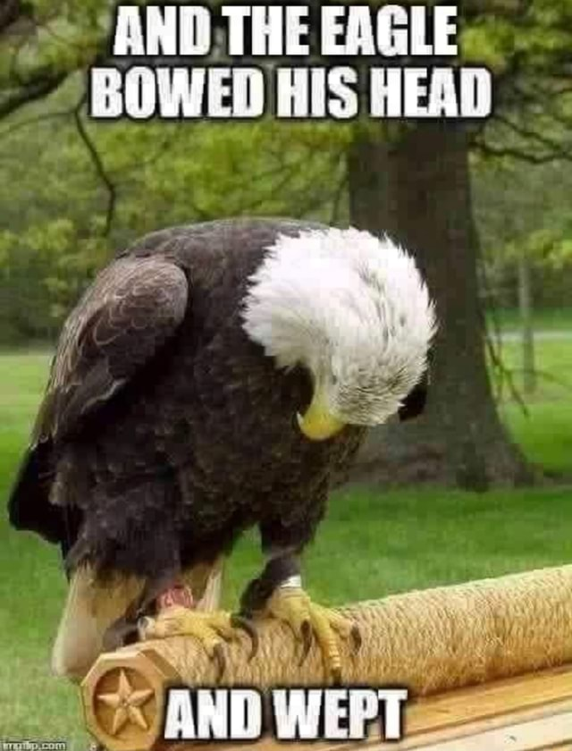 AND THE EAGLE BOWED HIS HEAD memes