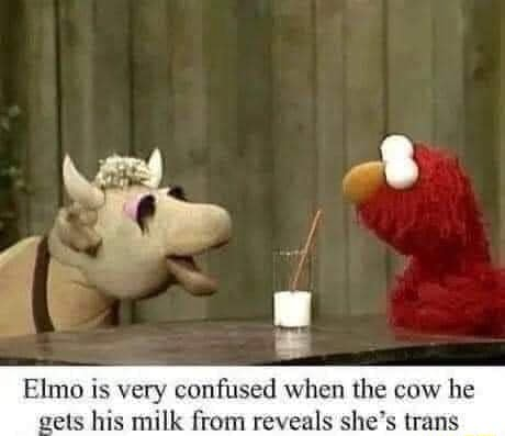 Elmo is very confused when the caw he wets his shilk from reveals she's trans meme