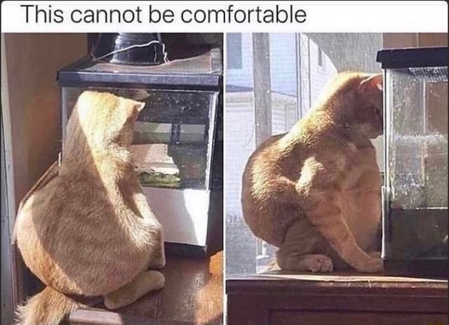I This cannot be comfortable memes
