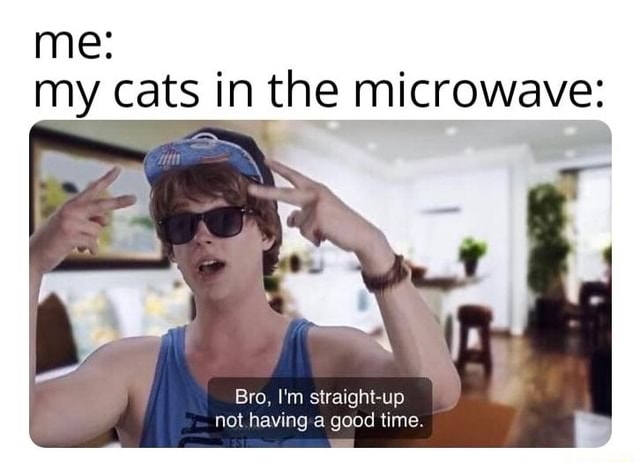 Me my cats in the microwave Bro, I'm straight up not having a good time memes