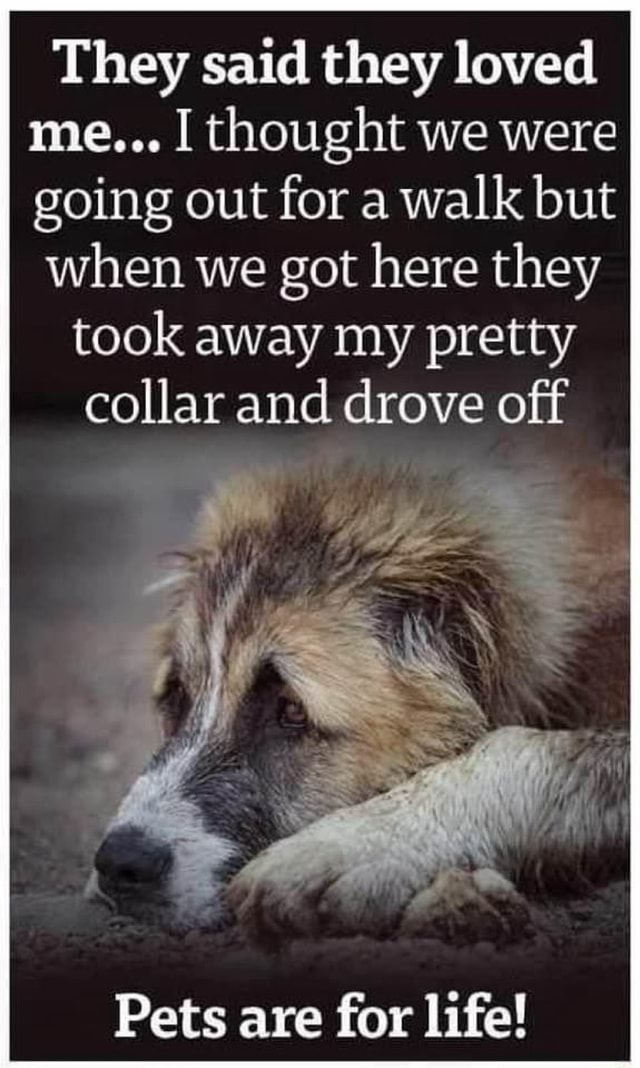 They said they loved me thought we were going out for a walk but when we got here they took away my pretty collar and drove off Pets are for life memes