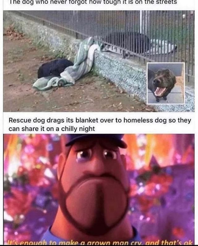 INE NOW WUGIT ON Rescue dog drags its blanket over to homeless dog so they can share it on a chilly night enouah ta make a arown man cry and that's ak meme