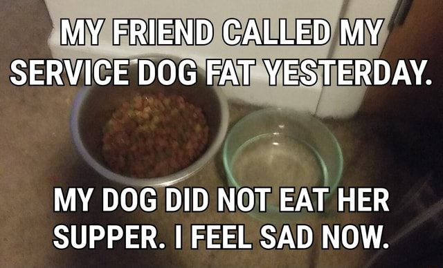 MY FRIEND CALLED MY SERVICE DOG FAT YESTERDAY. MY DOG DID NOT EAT HER SUPPER. I FEEL SAD NOW memes