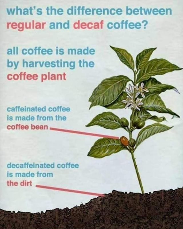 What's the di regular an allc by ha Is coffee plant is made fron coffee bean the dirt memes