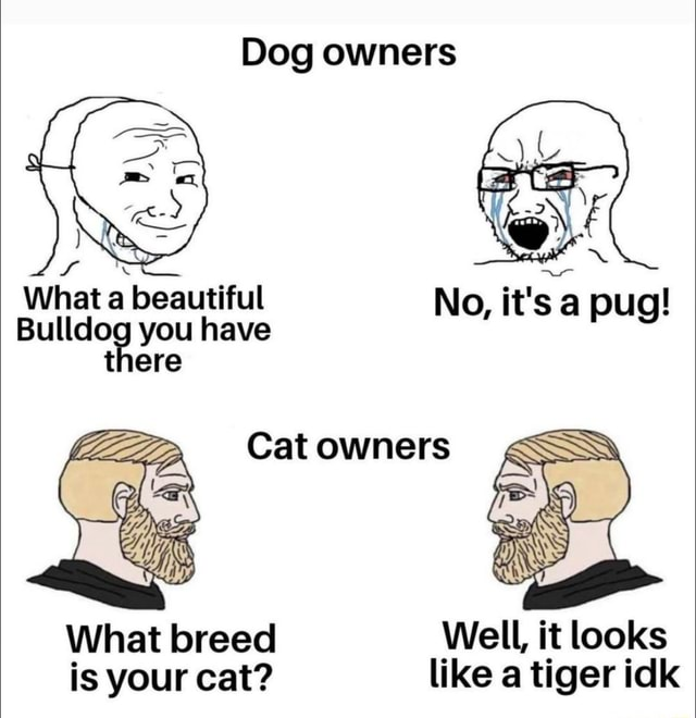 Dog owners What a beautiful No, it's a pug Bulldog you have there Cat owners What breed Well, it looks is your cat like a tiger idk meme
