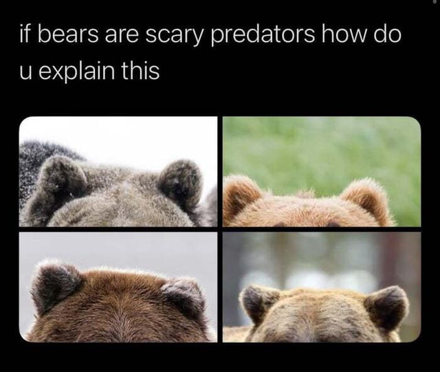 They and rsquo re so adorable if bears are scary predators how do u explain this meme