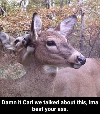 Damn it Carl we talked about this, ima beat your ass.  Damn it Carl we talked about this, ima beat your ass memes
