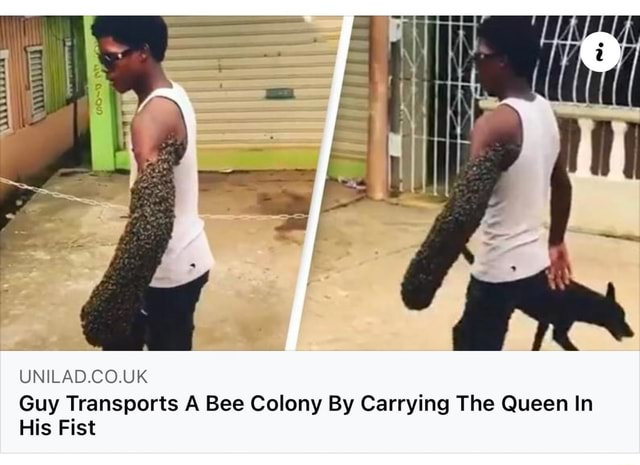 UNILAD.CO.UK Guy Transports A Bee Colony By Carrying The Queen In His Fist meme