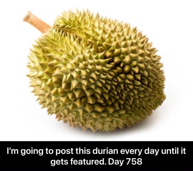 I'm going to post this durian every day until it gets featured. Day 758 I'm going to post this durian every day until it gets featured. Day 758 memes