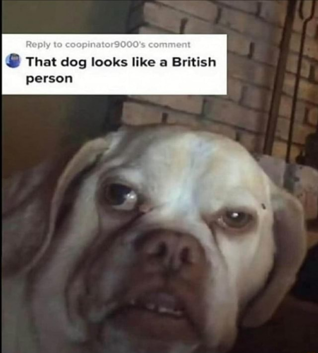 That dog looks like a British person memes