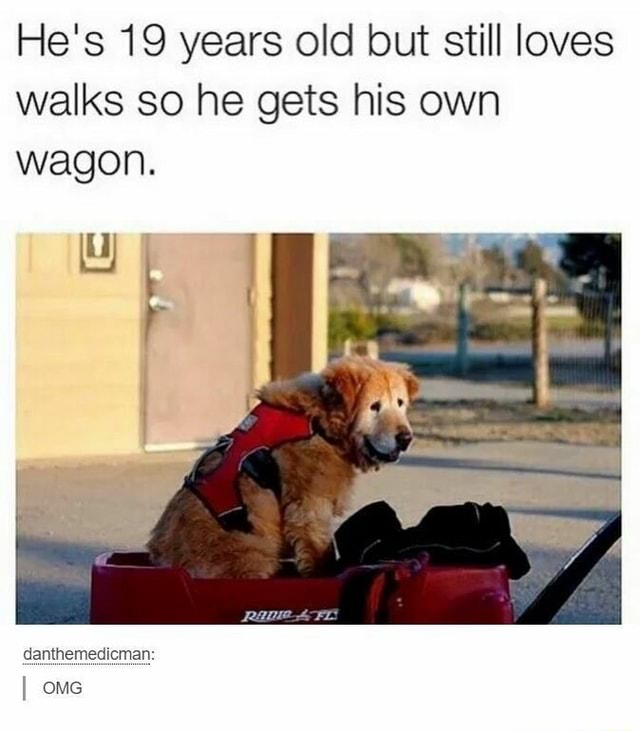 He's 19 years old but still loves walks so he gets his own wagon. danthemedicman OMG memes