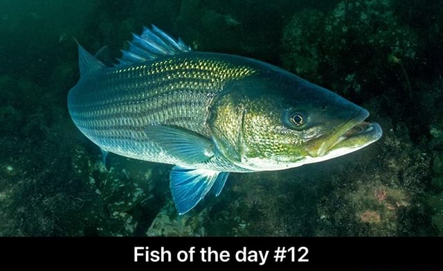 Fish of the day 12 Fish of the day 12 memes