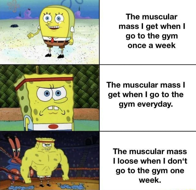 The muscular mass get when go to the gym once a week The muscular mass I get when go to the gym everyday. The muscular mass loose when do not go to the gym one week memes