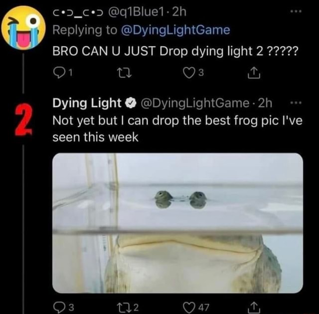 CeDd ce q1Blue1 Replying to DyingLightGame BRO CAN U JUST Drop dying light 2 Dying Light DyingLightGame Not yet but I can drop the best frog pic I've seen this week or Oa ty memes