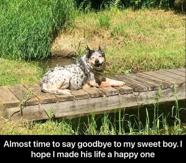 Almost time to say goodbye to my sweet boy. I hope made his life a happy one Almost time to say goodbye to my sweet boy. I hope I made his life a happy one memes