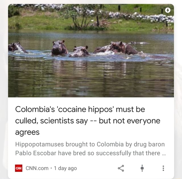 SS Colombia's cocaine hippos must be culled, scientists say but not everyone agrees Hippopotamuses brought to Colombia by drug baron Pablo Escobar have bred so successfully that there 1 day ago memes