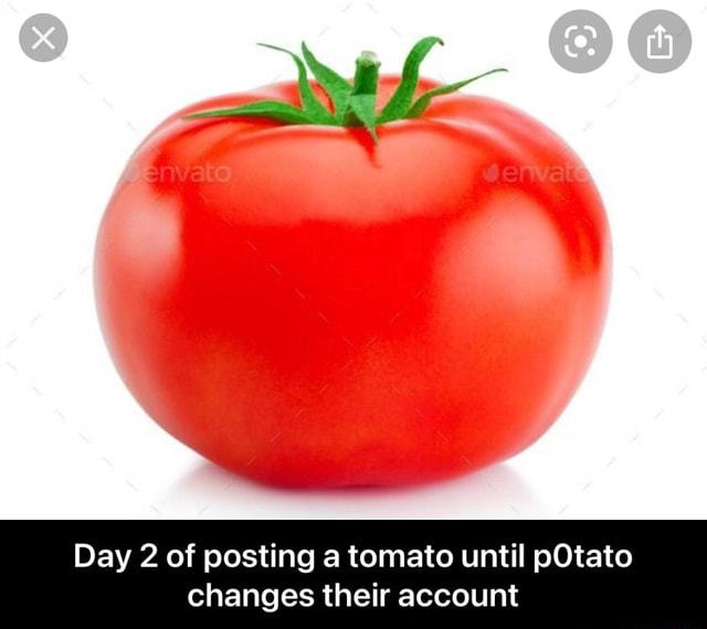 Day 2 of posting a tomato until pOtato changes their account Day 2 of posting a tomato until p0tato changes their account meme