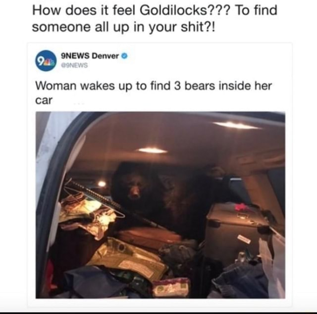 How does it feel Goldilocks To find someone all up in your shit Woman wakes up to find 3 bears inside her car meme