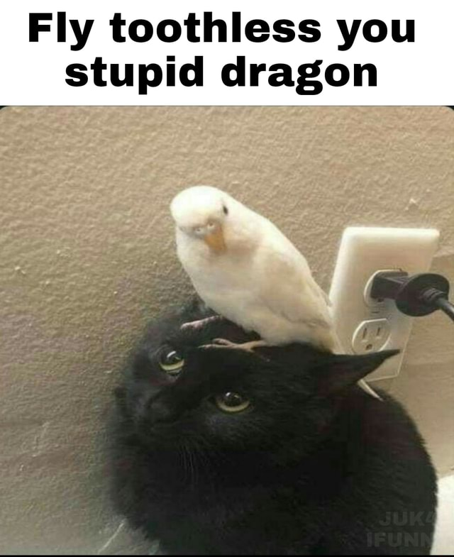 Fly toothless you stupid dragon meme