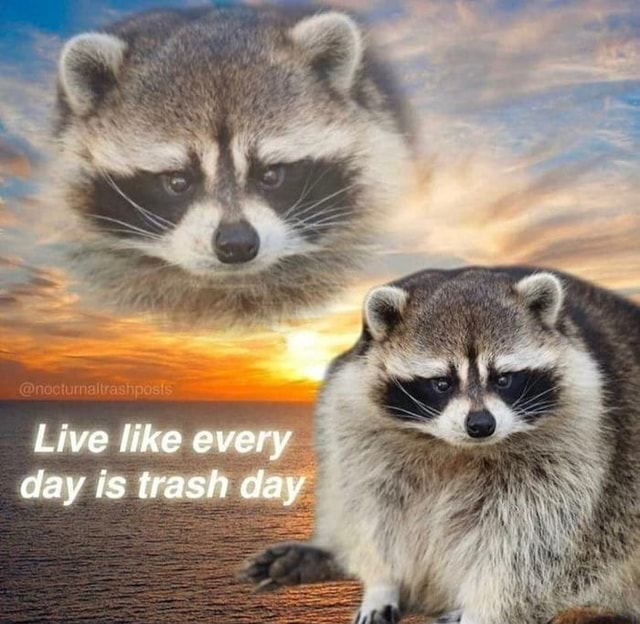 Live like every day is trash day memes