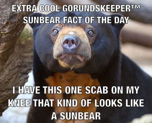 EXTRA COOL SUNBEAR FACT OF THE DAY I HAVE THIS ONE SCAB ON MY KNEE THAT KIND OF LOOKS LIKE A SUNBEAR memes