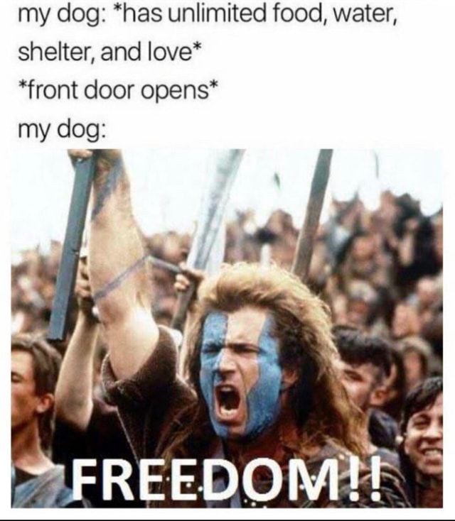 My dog *has unlimited food, water, shelter, and love* *front door opens* my dog FREEDOME meme