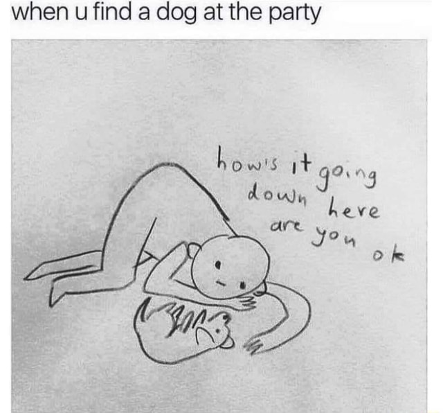 When u find a dog at the party how's it Ove down are Ok memes
