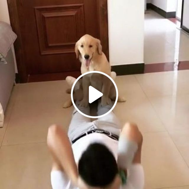 Dog And A Man Practice Exercise In Bedroom - Video & GIFs | Animals & Pets, adorable, workout, dog, dog breed, bedroom