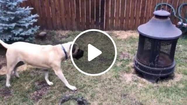 Dogs Play With Rabbit In Their Yard - Video & GIFs   Animals & Pets, funny dogs, smart dogs, dog breeds, yard houses