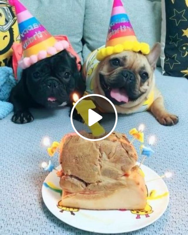 Dogs Are Very Happy With Birthday Cake - Video & GIFs | Animals & Pets, dogs, dog breeds, puppies, birthday cakes
