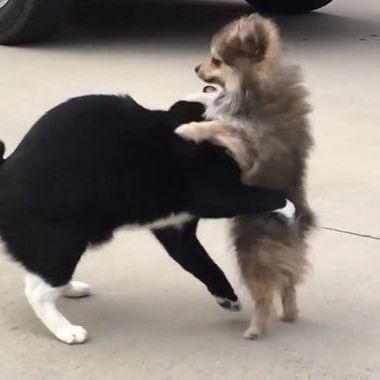 Cat doesn't want dog to bother him in parking lot