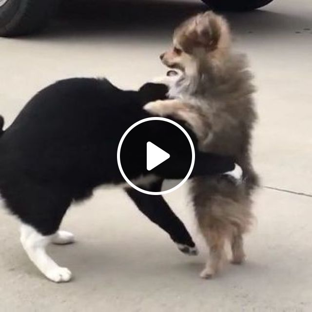 Cat Doesn't Want Dog To Bother Him In Parking Lot - Video & GIFs   Animals & Pets, funny cats, cute dogs, dog breeds, parking lots