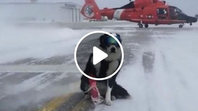 Dogs Are Traveling By Helicopter - Video & GIFs | nature & travel, dogs, animals, pets, travel, helicopter