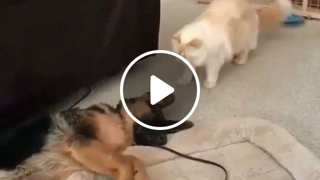 Trying To Decide If This Dog Is Currently Plugged In Or Not - Video & GIFs | Animals & Pets, lovely dogs, smart cats, living room furniture