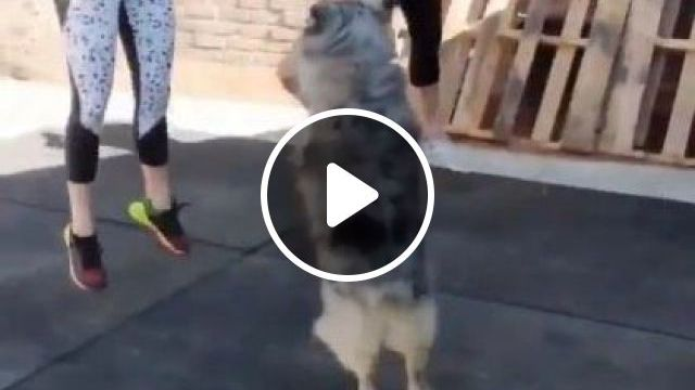 Dog And Girls Are Exercising Together - Video & GIFs | Animals & Pets, smart dogs, cute girls, clothes fashion, women shoes