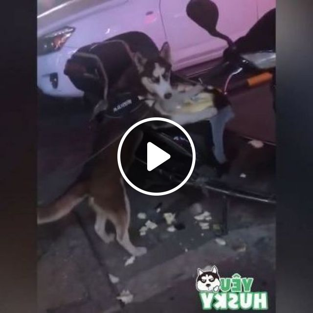 Dogs Are Waiting For Me By Motorbike And When I Come Back - Video & GIFs | Animals & Pets, Dogs, Motorcycles, Japanese streets